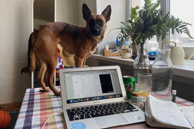 Сотрудники TheVillage оценивают домашние рабочие места друг друга