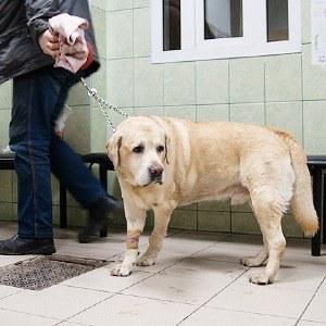 Всё не как улюдей: Какработает ветеринарная неотложка
