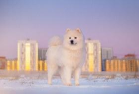Как правильно защитить собачьи лапы отольда иреагентов