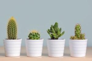 5 домашних растений, закоторыми почти ненужно ухаживать