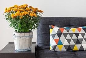 Как преобразить квартиру с помощью домашнихрастений
