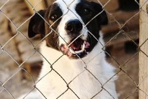 Как помочь бездомным собакам найти дом