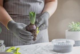 Забота о ближнем: Какпересаживать комнатные растения