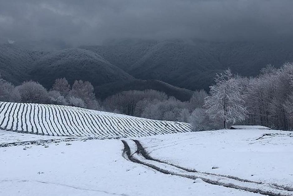 Снег в Сочи в фотографиях его жителей