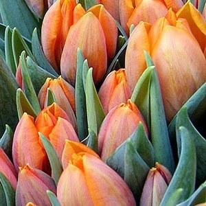 Потоки цветов: Как Florist.ru делает глобальный бизнес на розах и герберах