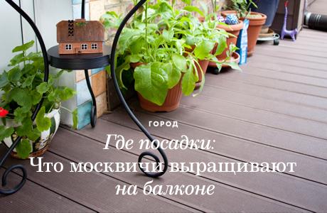 Где посадки: Что москвичи выращивают на балконе