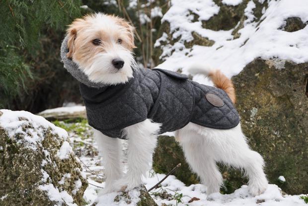 Как архитектор стала шить одежду для собак