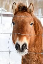 Лошадь Пржевальского идругие животные, которых признали исчезнувшими вРоссии