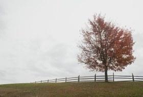 Как бороться сосенней хандрой?