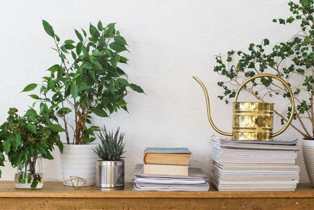 Дышите глубже: Каксделать воздух вдоме идеальным