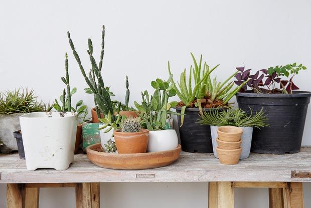 Сколько стоит пристроить растения навремя отпуска