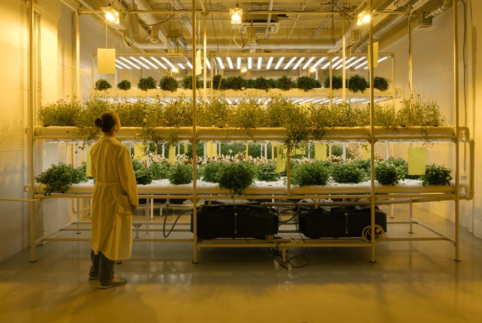 Как в Новой Москве выращивают съедобные цветы, микрозелень и мини-арбузы