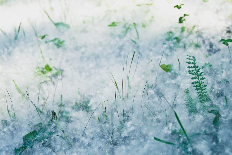 Москву накрыло «летним снегом»