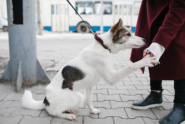 Убирать за своей собакой во время прогулок