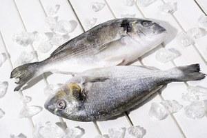 Как отличить размороженную рыбу отохлаждённой
