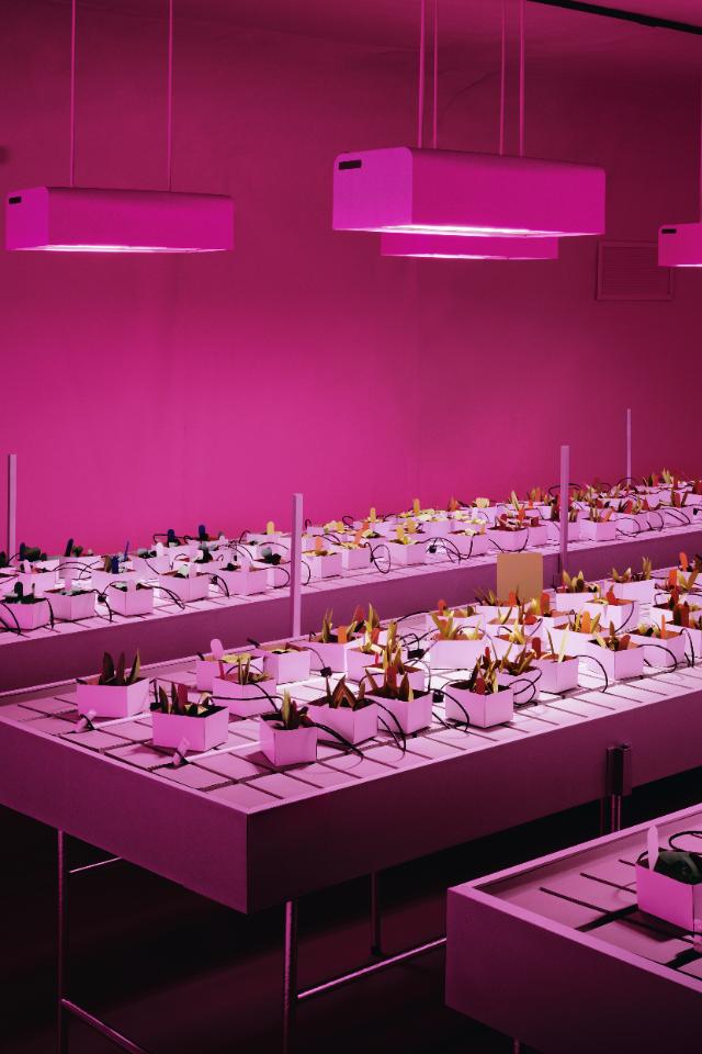 В«Гараже» откроется выставка работ немецкого фотографа Томаса Деманда
