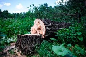 Как москвичи протестуют против вырубки деревьев в «Кусково»
