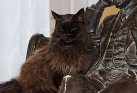 Старший мяучный сотрудник: Какживут коты вмосковских музеях