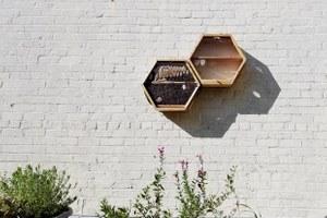 Можно ли разводить пчел вквартире? А скорпионов?