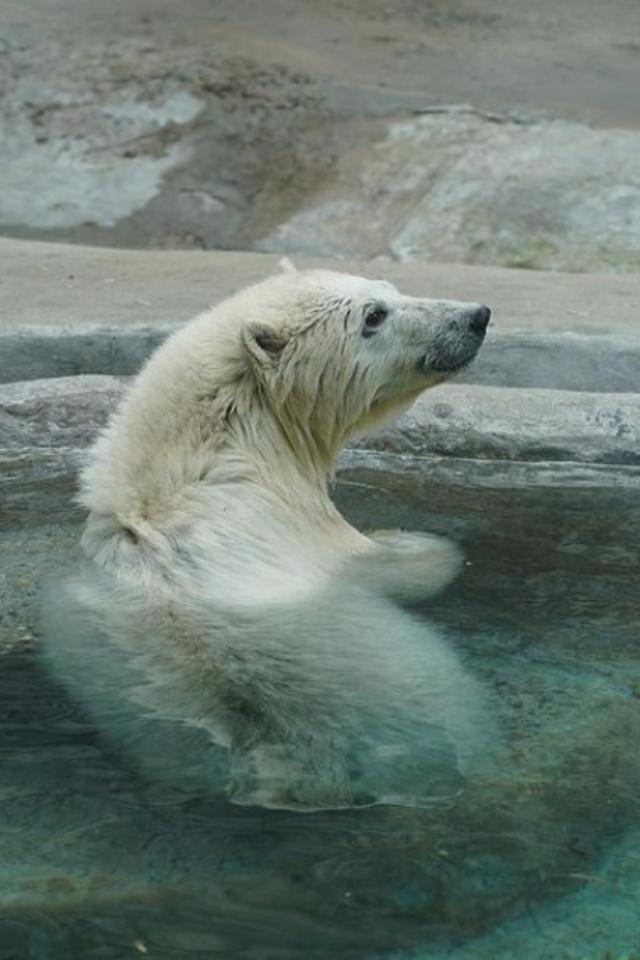 Московский зоопарк перешел наосенний режим. Теперь онработает до19:00