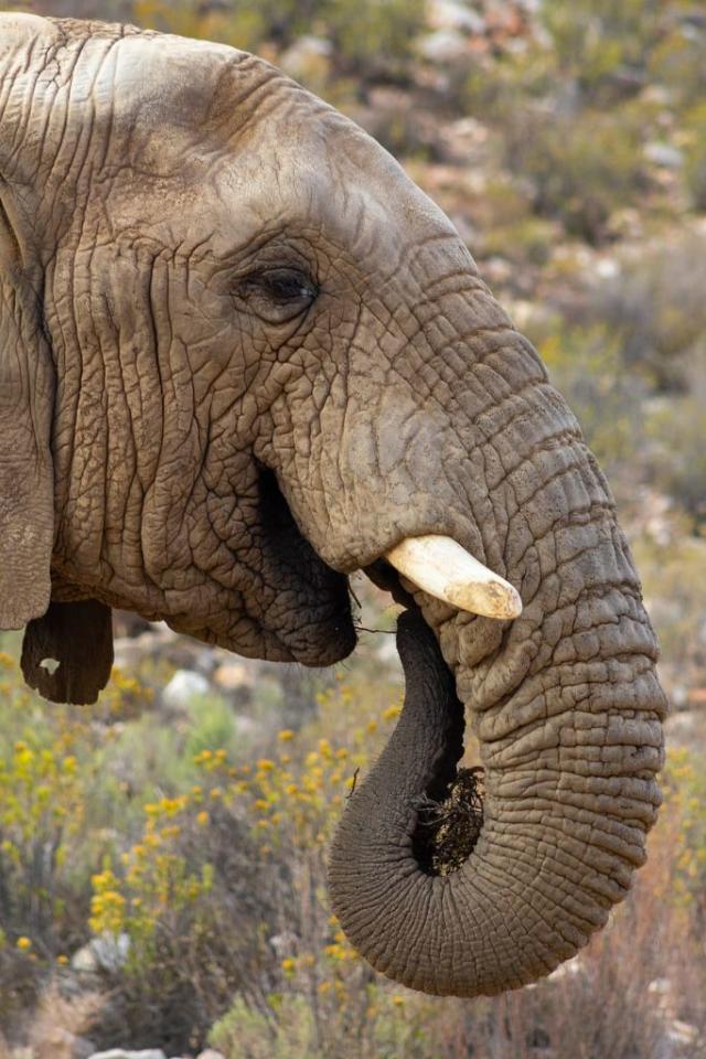 В Сочи открыли санаторий для отдыха и лечения слонов