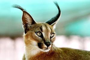 Кража кота заполмиллиона иещё 7громких происшествий сживотными