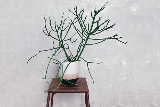Первая зелень: Какие сервисы помогут завести растения дома