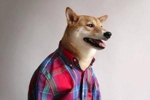 Сколько зарабатывают собаки икошки из интернета