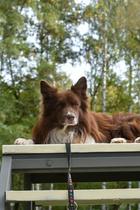 Более 60 % владельцев собак не считают Москву дог-френдли