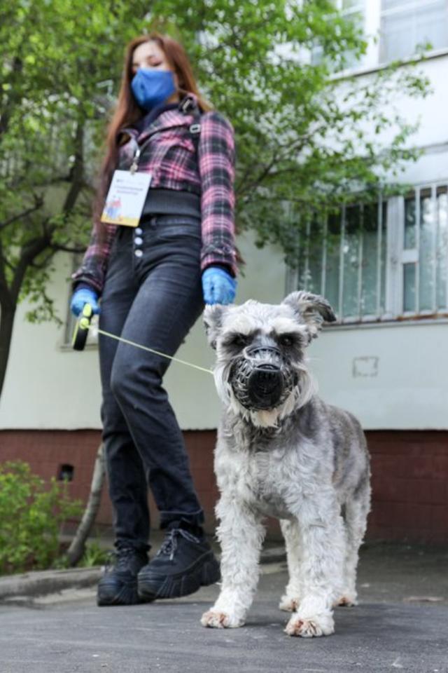 Проект «Погуляем свашей собакой» заработал вМоскве иПетербурге