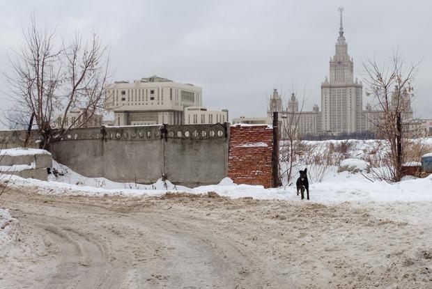 «Здесь легко получить по башке»: Как расчищают место под научную долину МГУ