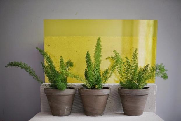 Сад иогород: Где покупать балконные растения