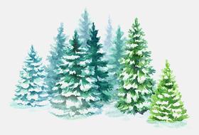 Купите новогоднюю елку — имыпосадим елку вСибири