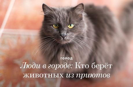Люди в городе: Кто берёт животных из приютов