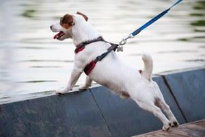 Как гулять с собакой (втомчислечужой)во время эпидемии коронавируса