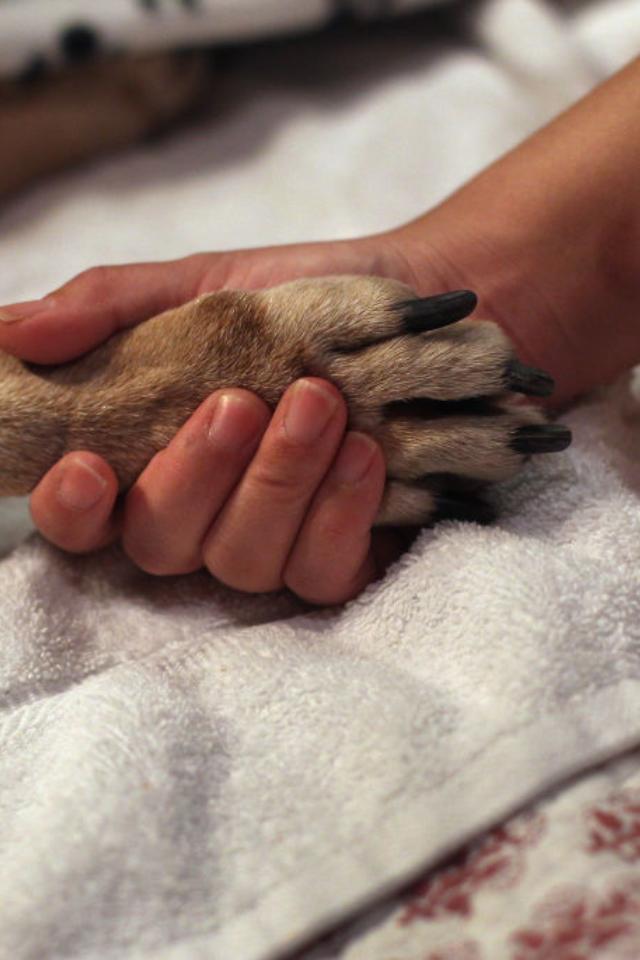 Три четверти россиян держат у себя домашних животных