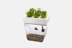 Цифровой сад: 5гаджетов длядомашних растений
