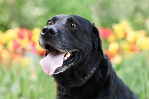 Собачья работа: Кто убирает засвоими питомцами