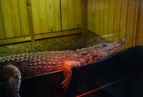 Как петербургский священник открыл при храме зоопарк скрокодилами