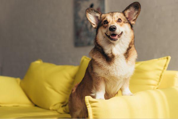 Сколько стоит страховка для кота и собаки