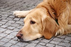 Личный опыт: Что делать, если вы нашли собаку