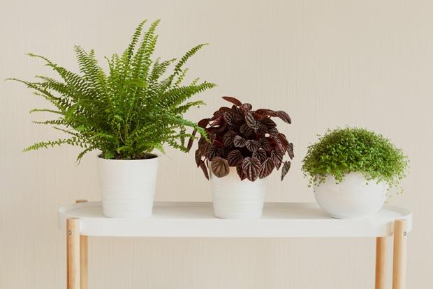 7 комнатных растений для тех, укого окна выходят насевер