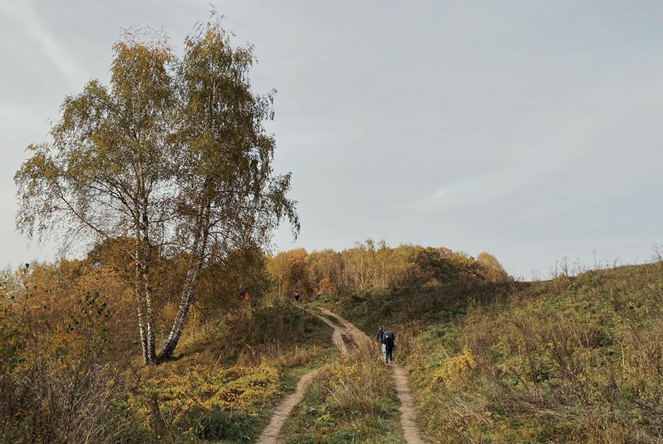 Битцевский лес превратят в парк. Под угрозой сто видов птиц икраснокнижные растения