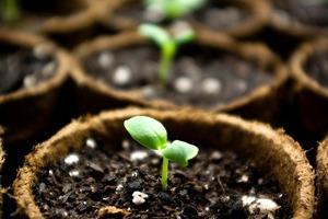 Личный опыт: Как организовать коммуну вгороде