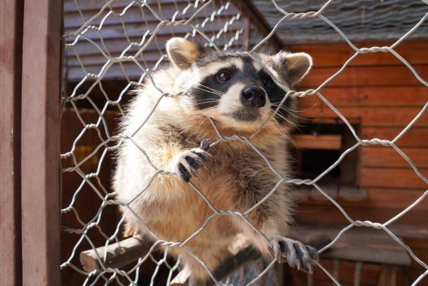Звери в Иркутске: Как живут зоопарки после карантина