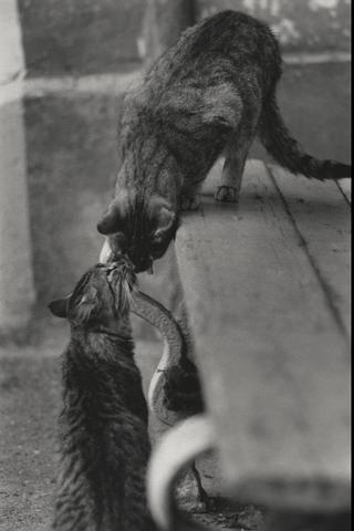 Кошки Гродно, индустриальная Италия исоветские киноплакаты— какие выставки откроются вМАММ