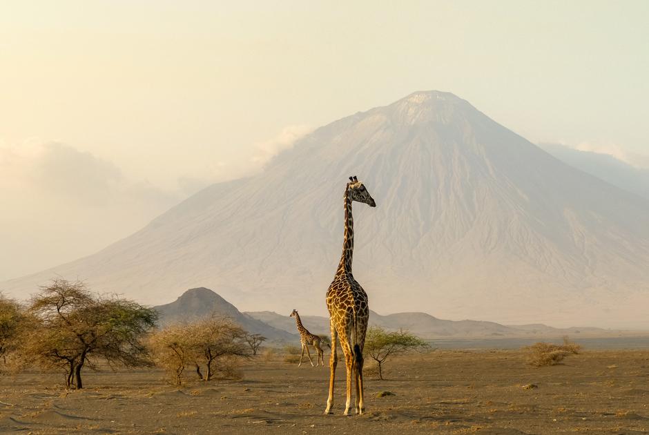 Сколько стоит жизнь в Танзании
