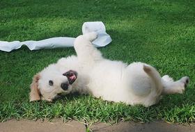 «Кто-то ворвался ипорвал диван!»: Представьте смс отвашего кота илипса