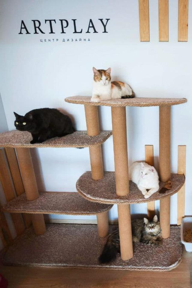 ВArtplay появилось пространство для кошек, ищущих дом