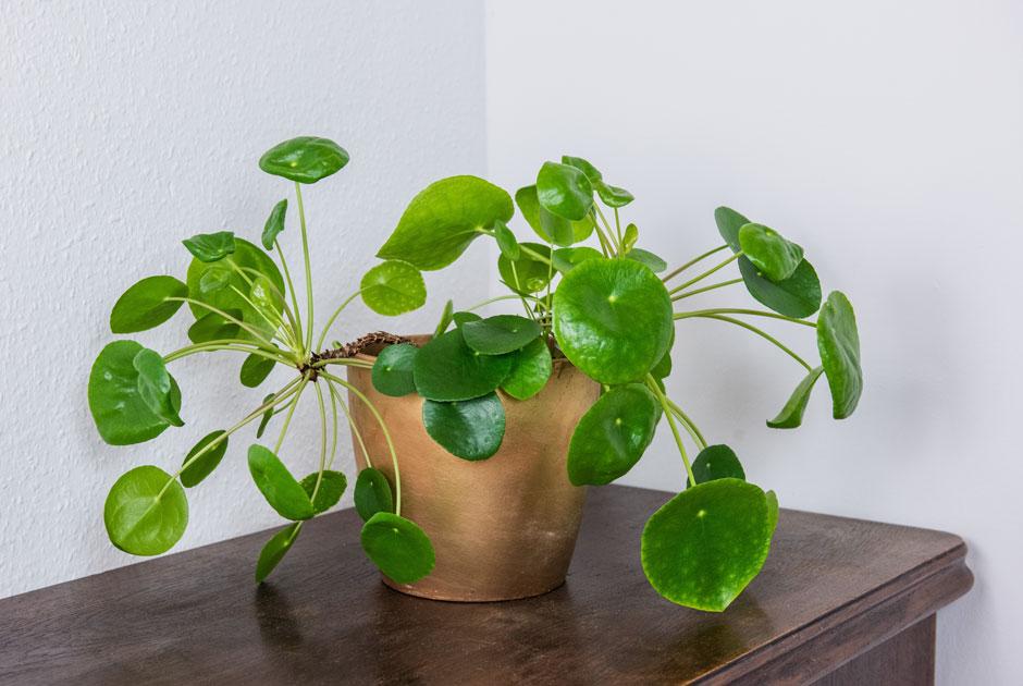 Какие домашние растения заводить новичкам и как за ними ухаживать? Советуют эксперты